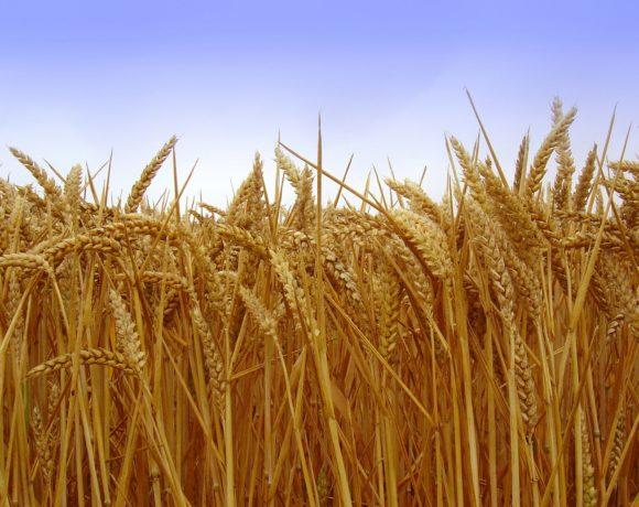 Le POP soutient l'agriculture et  la souveraineté alimentaire